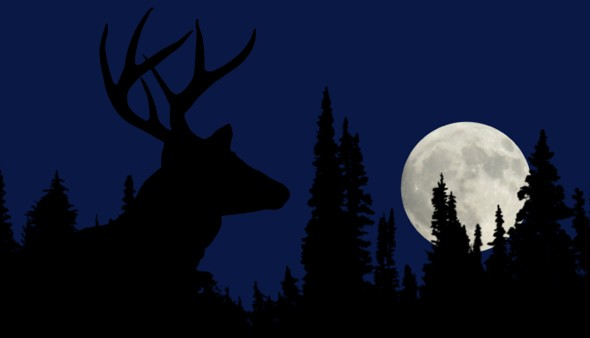full-moon-buck-590x338