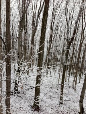 Woods-300x400